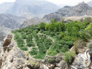 The green terraces of Jebel Al Akhdar
