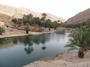 A lagoon surrounded by palm trees at Wadi Bani Khalid