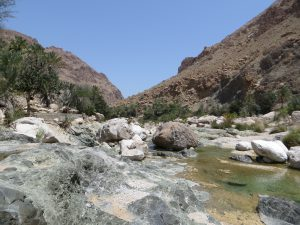 The cool waters of of wadi Tiwi with palm trees and the canyon walls in the background
