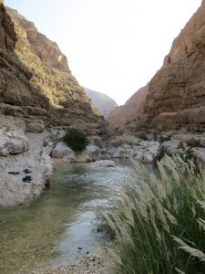 Looking along Wadi Shab with lush vegetation at the front of the picture with clear water stretching along the canyon