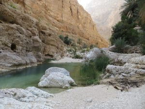 Cool, green, freshwater pool of Wadi Shab with palm trees and canyon walls visible in the background